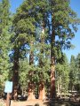 Národní park Sequoia